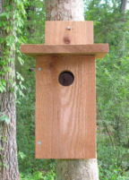 Bluebird house front view